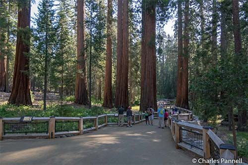 "<a href=""https://emerginghorizons.com/yosemite-unveils-accessible-mariposa-grove/"">Yosemite Unveils Accessible Mariposa Grove</a>"