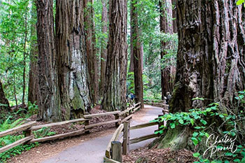 Take a Wheelchair-Accessible Stroll Through California's Muir Woods