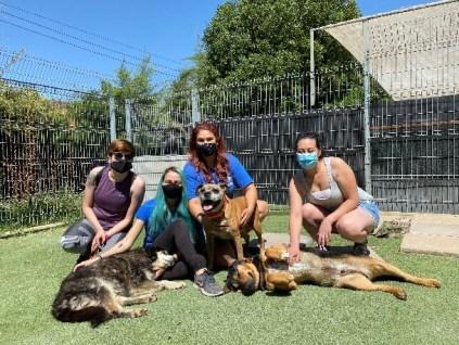 huella animal emerid pets