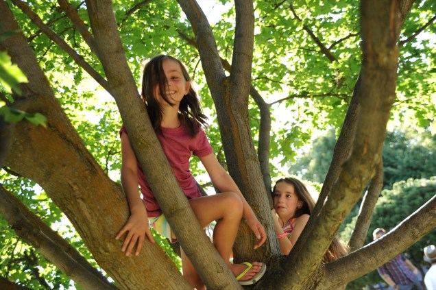 Climbing trees at the Emerson-Garfield Farmers' Market.