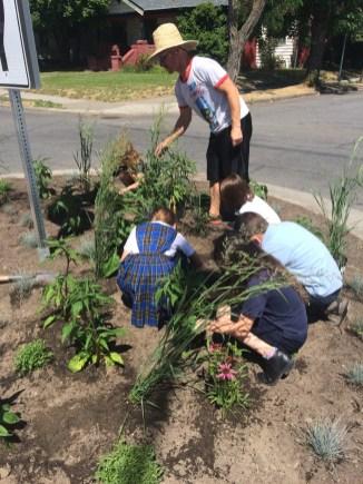 Trinity Catholic School Traffic-Circle Planting, June 10