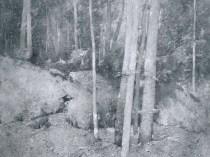 Emil Carlsen Maine Woods (also called Forest Interior), c.1923