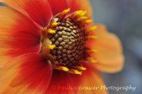 redandorangeflower2