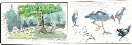 puk, Emilie Geant, illustration, sketch, new zealandeko, western spring, auckland