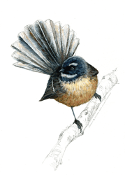 bird, new zealand, endemic, native