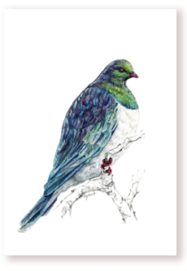 kereru, wood pigeon, bird, new zealand, emilie geant, outdoor, native, kiwiana, prints, watercolor, painting, tree, nature, wild life