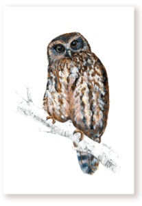 morepork, owl, emilie geant, ruru, new zealand, bird, feather, print, emilie geant artwork, watercolor, ink