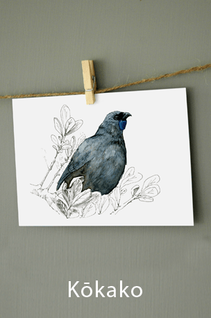 new zealand, illustration , bird , native , watercolor , ink , mixed media, kokako, grey