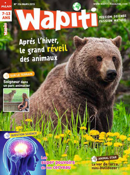 Wapiti-Hiver-Animaux-Cerveau-Mars-2015