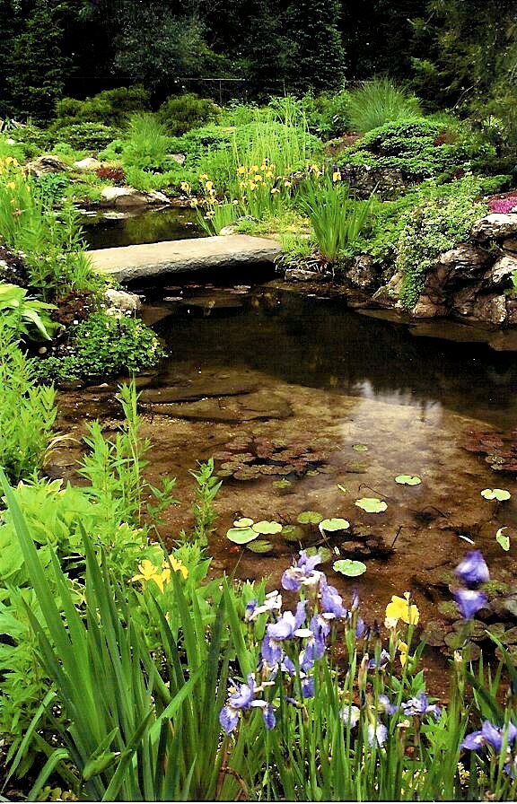 St James Long Island, NY Residence Koi Pond with lily pads by Emil Kreye & Son, Inc.