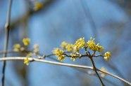 Frühling_2013-021