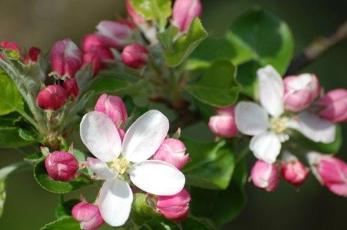 Blüten-035