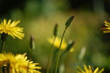 Blüten-008