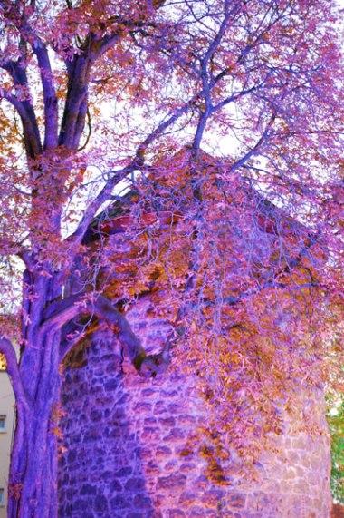 Herbst-046
