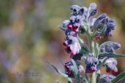 Blüten-im-Mai-022