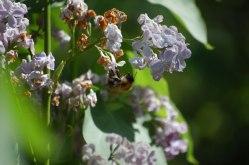 Blüten-im-Mai-040