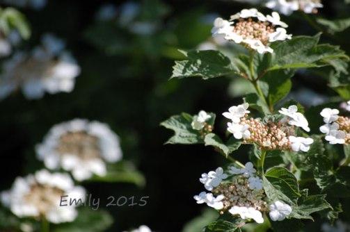 Blüten-im-Mai-044