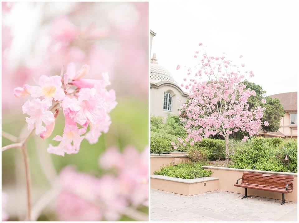 San_Diego_Destination_Wedding_Engagement_Photographer-balboa-park-tree-blossom-photo