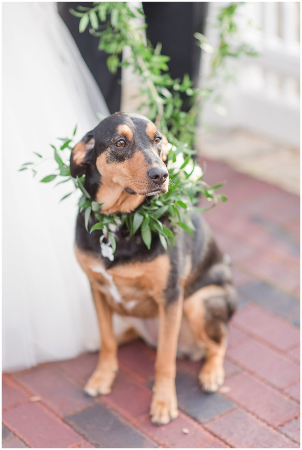 wedding-day-first-look-with-dogs-virginia-wedding-photographer