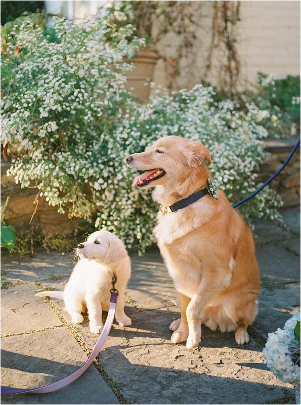 dogs at wedding photo