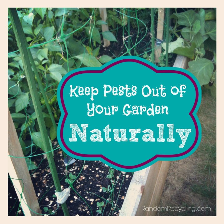 Keep Pests Out of Your Garden Naturally