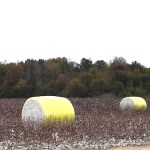 Bales of cotton
