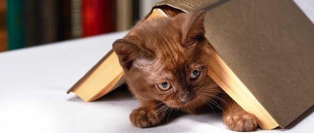 a small cat on a table with an open book on top of him, making a tent-shape