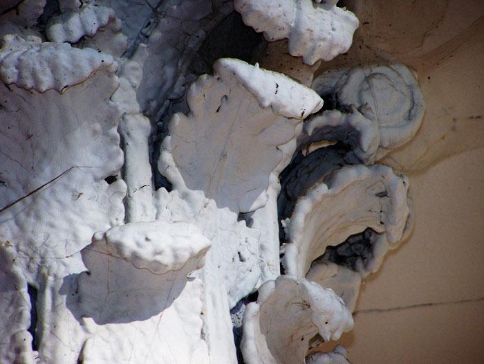 Close up on Corinthian Column