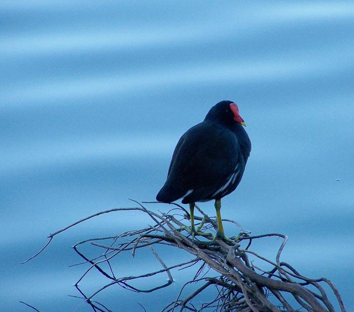 Lone Bird #2
