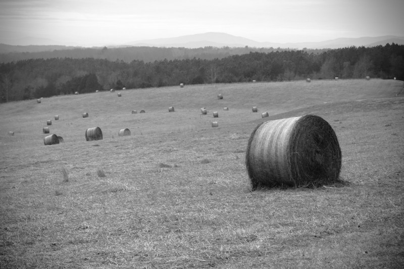 Landscape dotted with Hay Bales