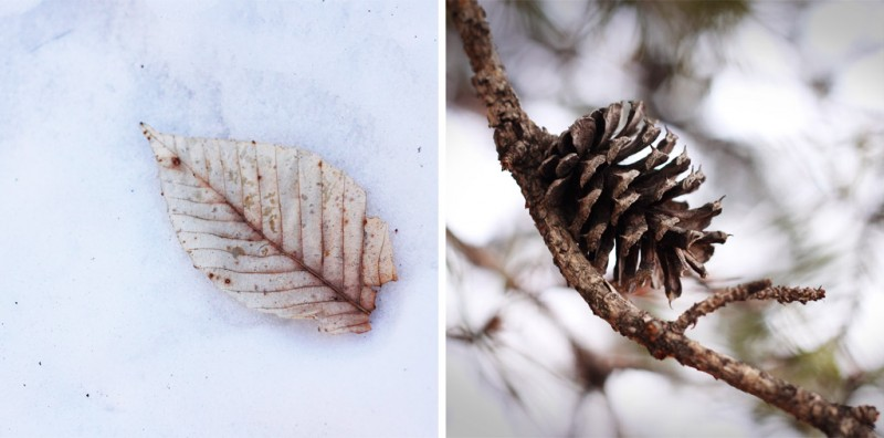Leaf and Pinecone