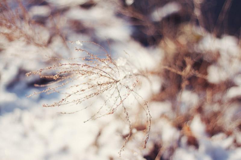 Wispy Plant