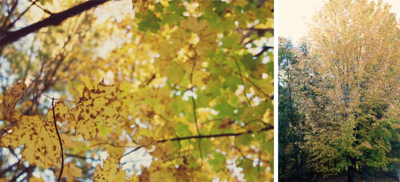 Fall Leaves Diptych