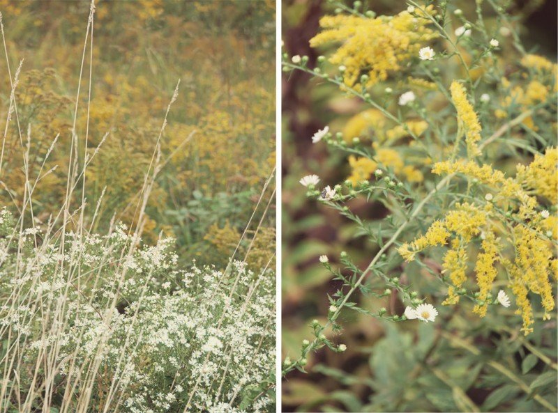 Goldenrod and wildflower diptych