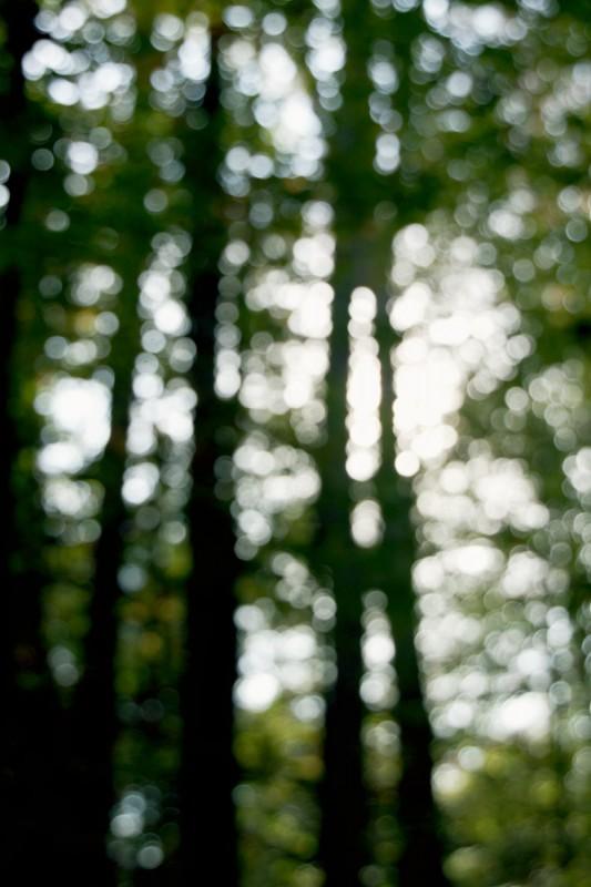 Trees bokeh