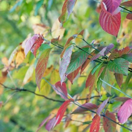 1007_leaves2