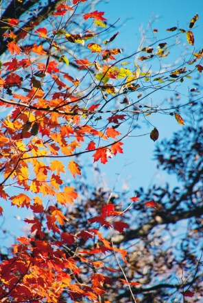 1021_fall-leaves2
