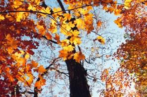 1021_fall-leaves3