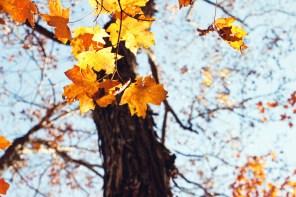 1021_fall-leaves4
