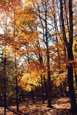 1021_fall-trees4
