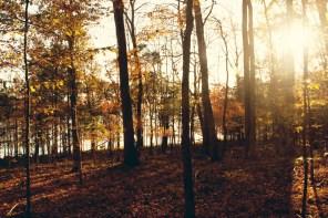 1021_fall-trees9