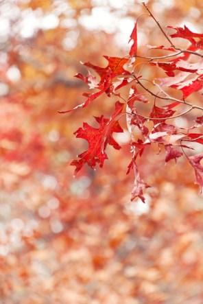 1112_leaves