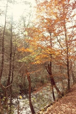 Deep Creek Trail