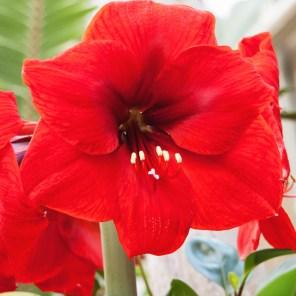 1115_flower2