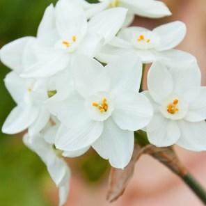 1115_flower5