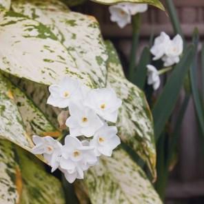 1115_flower6