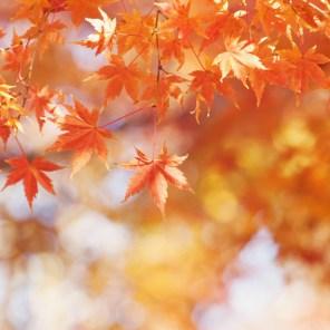 1115_leaves1