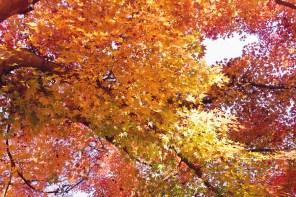 1115_leaves3