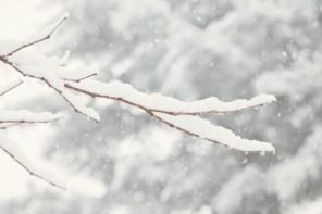 219_snow