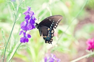 603_butterfly2